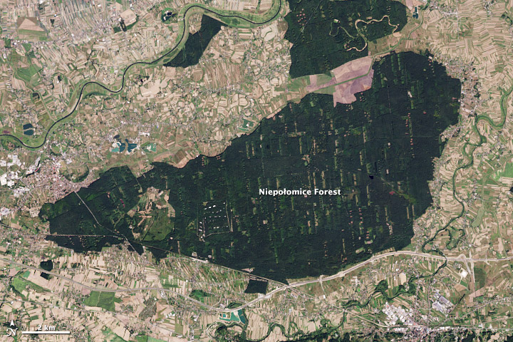 Ảnh chụp bản đồ vệ tinh về việc bảo tồn và sử dụng đất xác định diện tích rừng ở Ba Lan